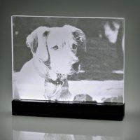 "LED Display ""Hund"""
